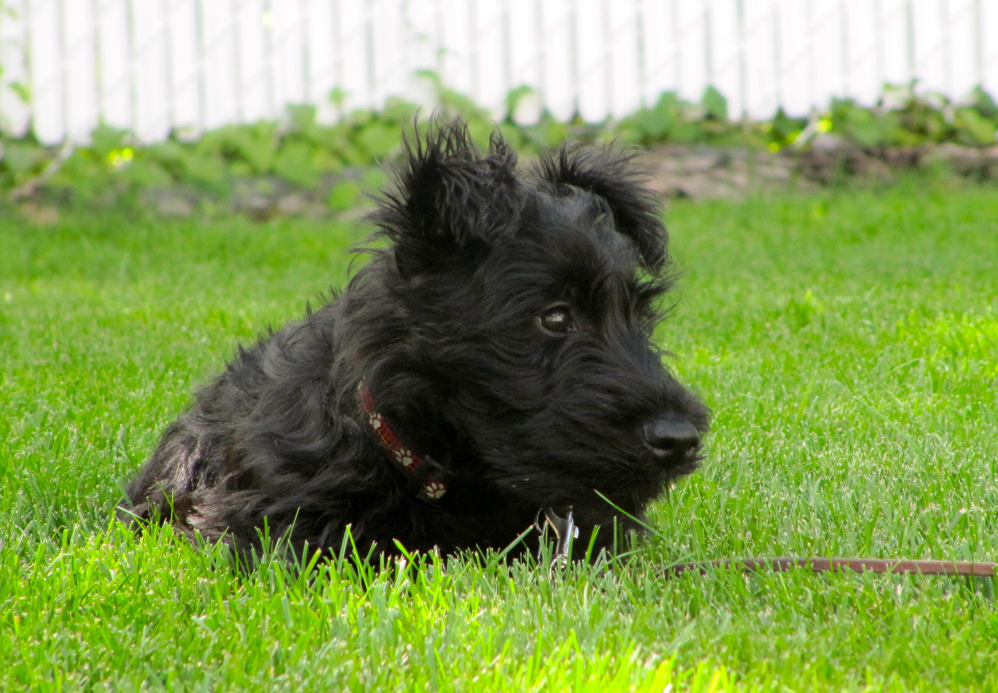 Dogs Prairie Girl Wonders