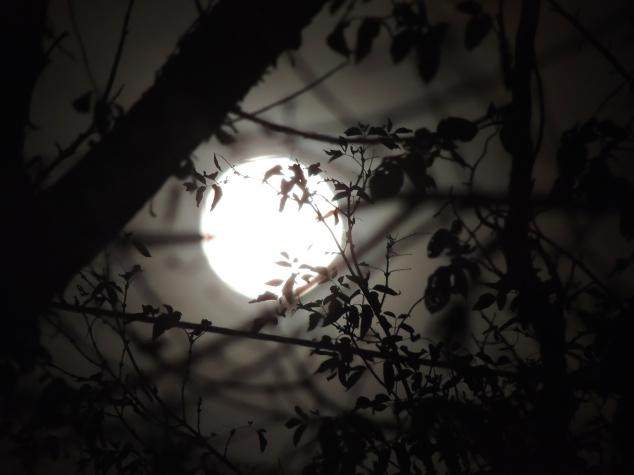 moon on Friday night
