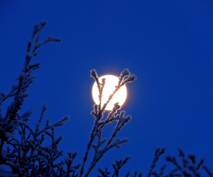 hoar frost Dec 26