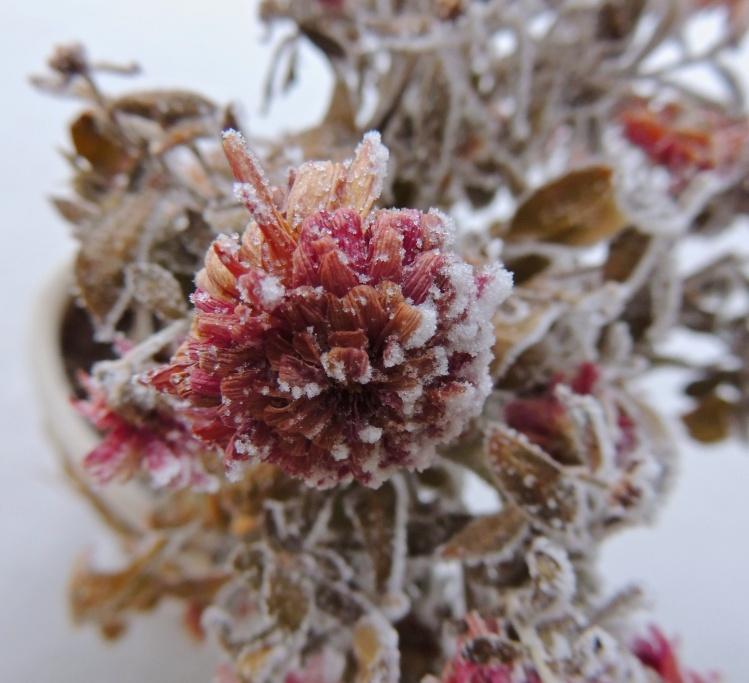 hoar frost Jan 6