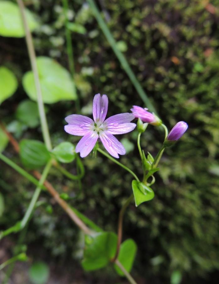 forest walk wildflower
