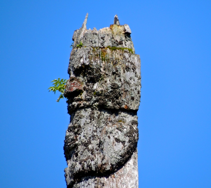 top of Prince Rupert totem pole
