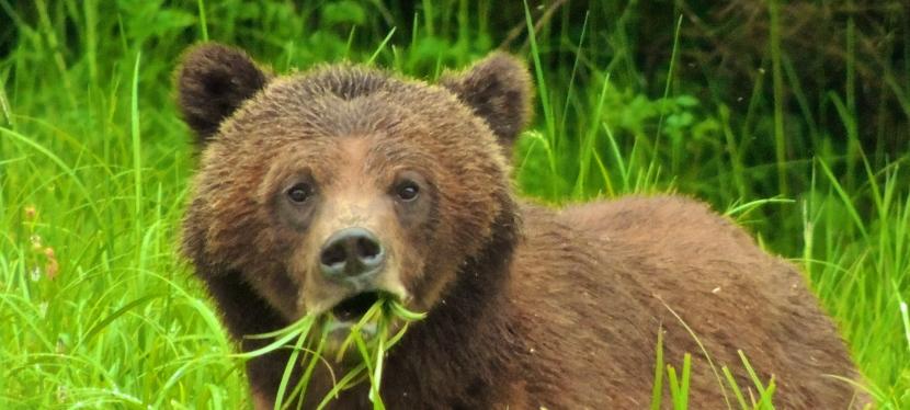 My Favourite Bear