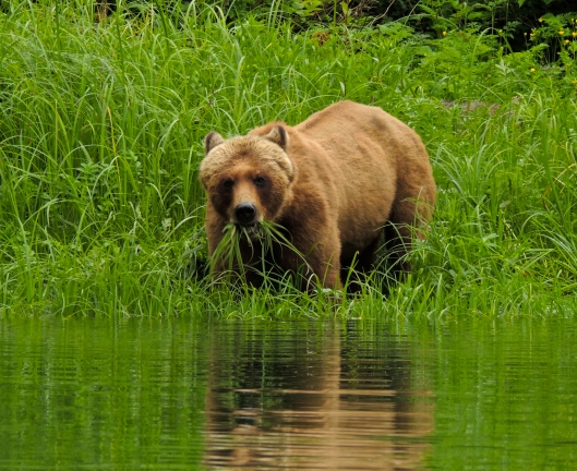grizzly checking us out