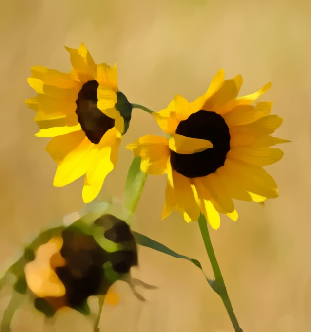 two sunflowers - artistic effect