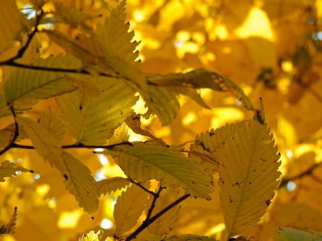Central Park Yellow