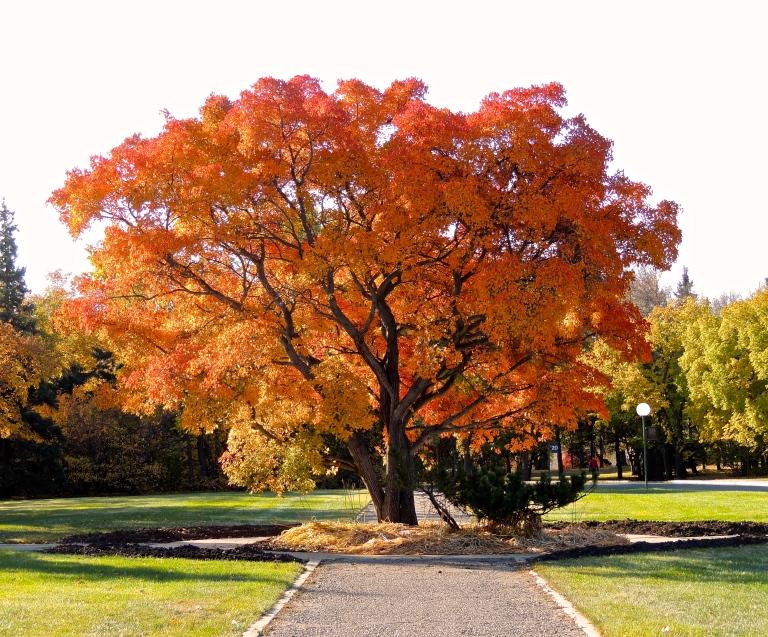 new favourite tree 3