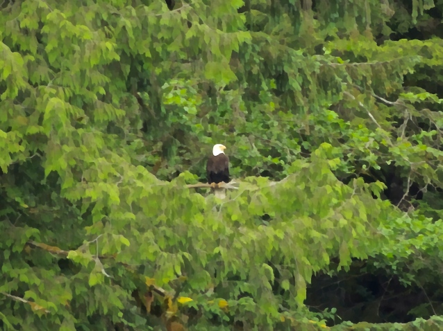 Eagle surveying the inlet