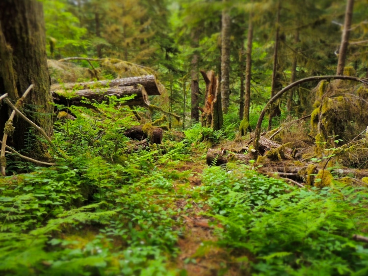 Walking in the Great Bear Rainforest
