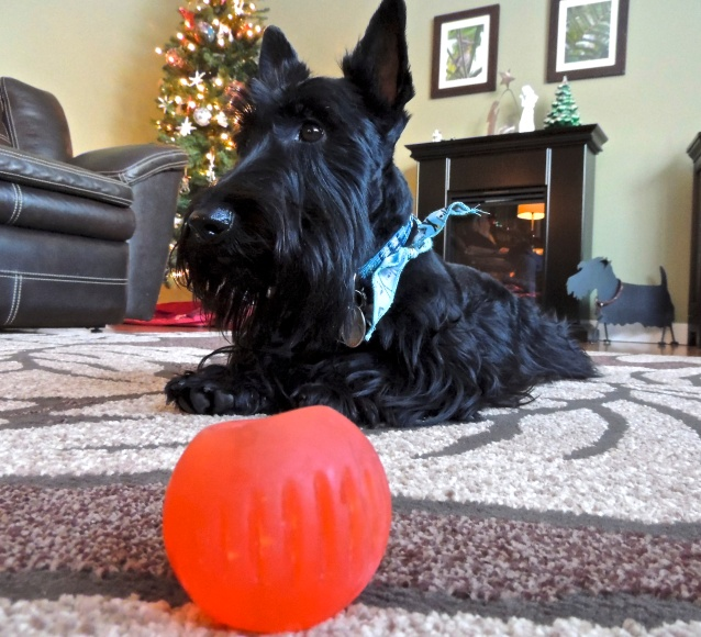 Casey and his red ball