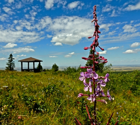 Look-out Point at Cypress Hills