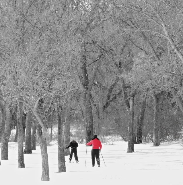 cross-country skiing Wascana Park