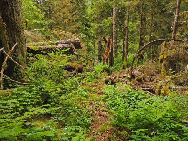 Great Bear Rainforest walk