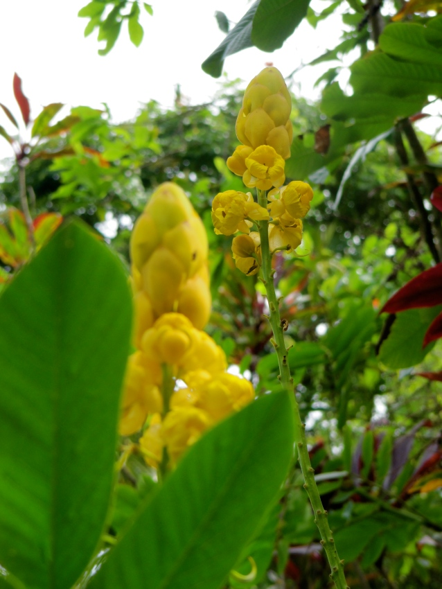 Maui Garden of Eden walk on the road to Hana