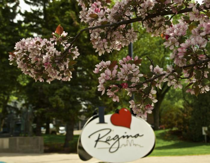 I Heart Regina Cherry Blossoms