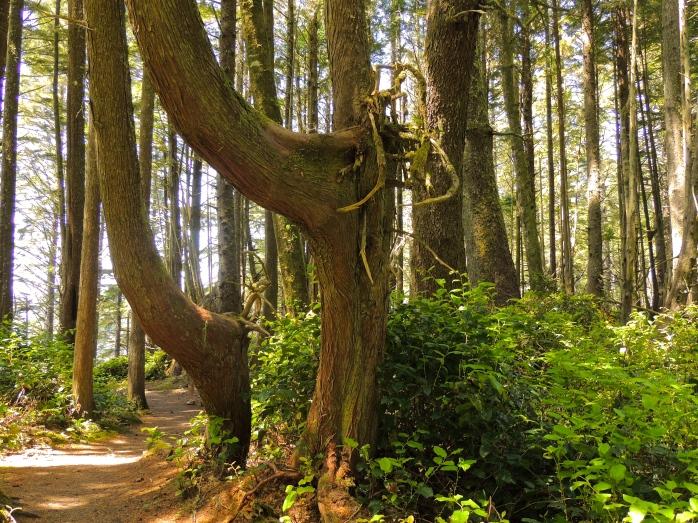 trail between Botany Bay and Botanical Beach