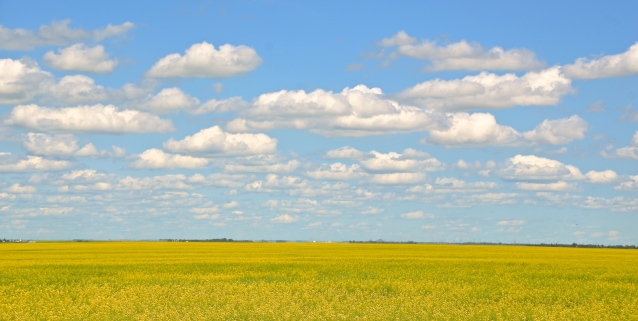 favourite prairie landscape