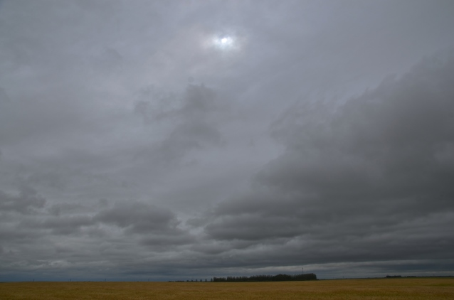 saskatchewan wheat field against a grey sky5