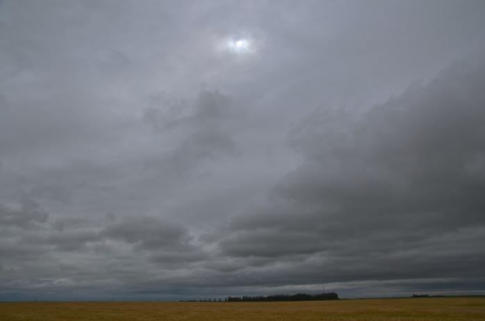 saskatchewan wheat field against a grey sky5