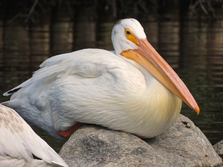 Wascana Waterfowl Park 3