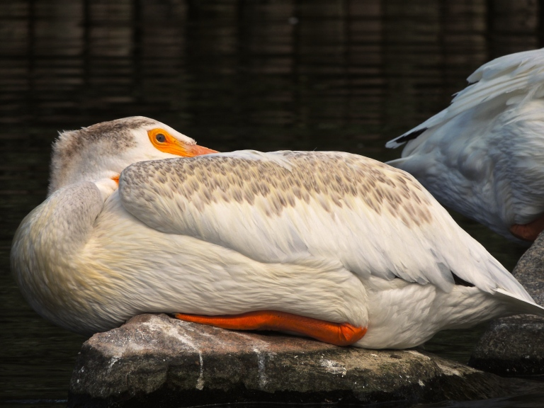 Wascana Waterfowl Park 4
