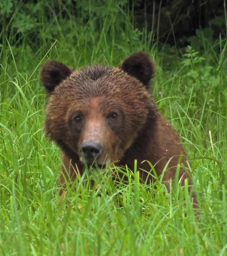 Great Bear Rainforest 1
