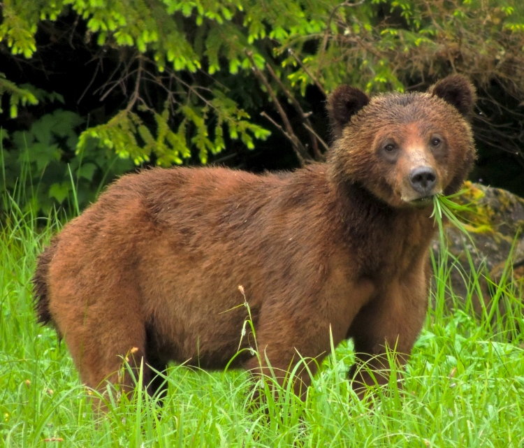 Great Bear Rainforest 2