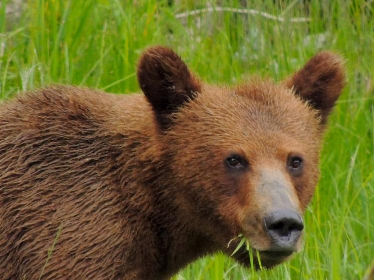 Great Bear Rainforest 3