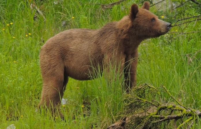 Great Bear Rainforest 4