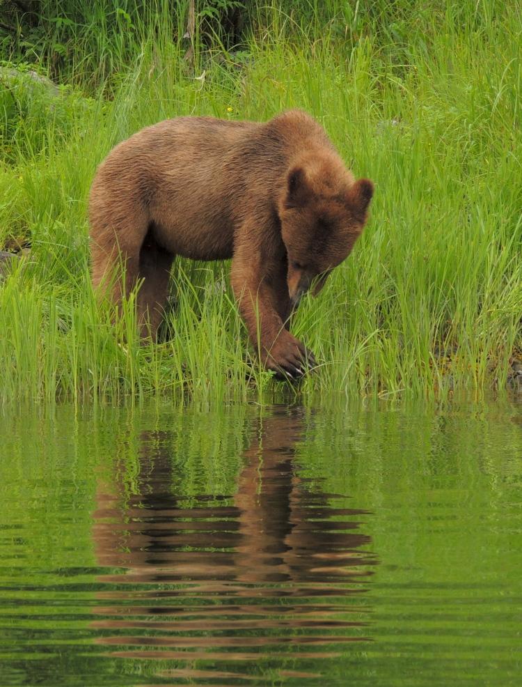 Great Bear Rainforest 6