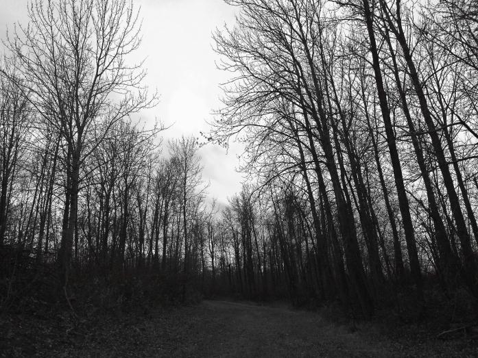 black and white Finlayson Island