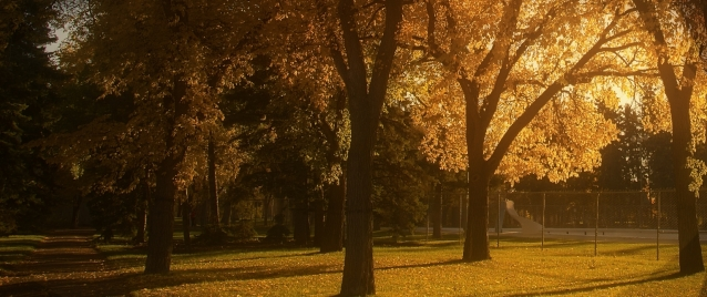 Wascana Park 2014 romantic look