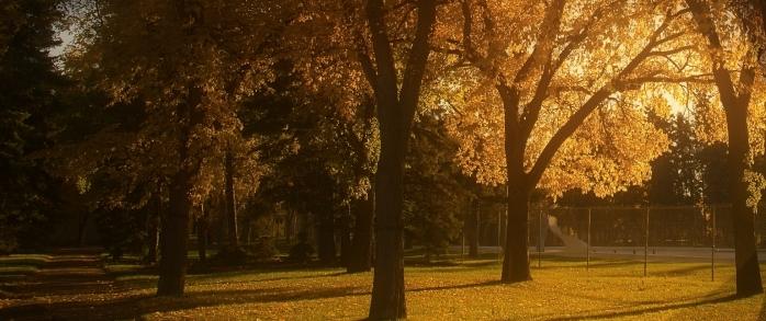 Wascana Park 2014 romantic look