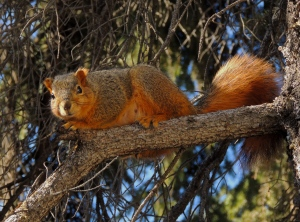 springtime squirrel