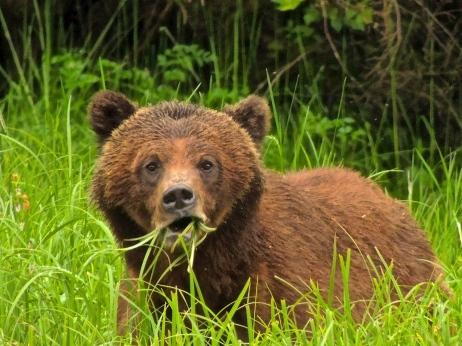 Great Bear Rainforst 2013 1