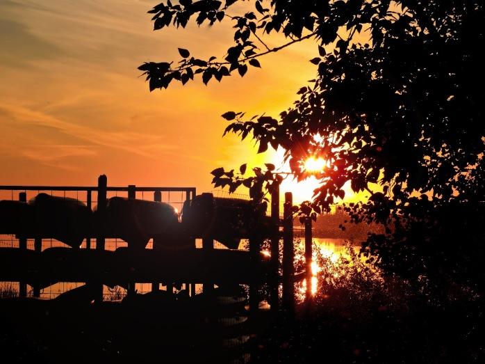 Elk Island Sunset 2