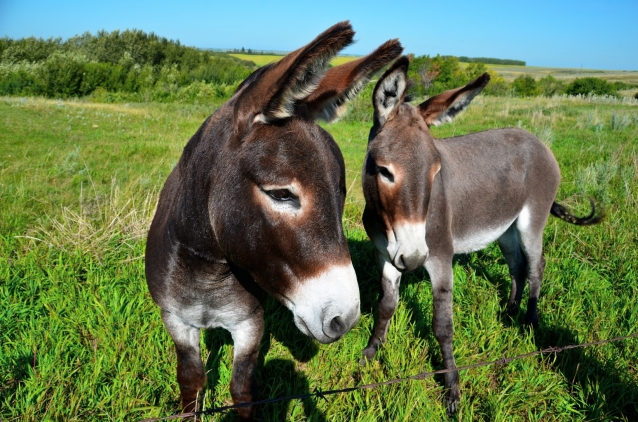 pretty donkeys