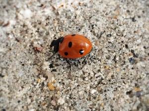 ladybug break