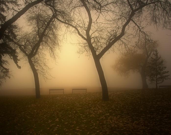 Wascana Park benches