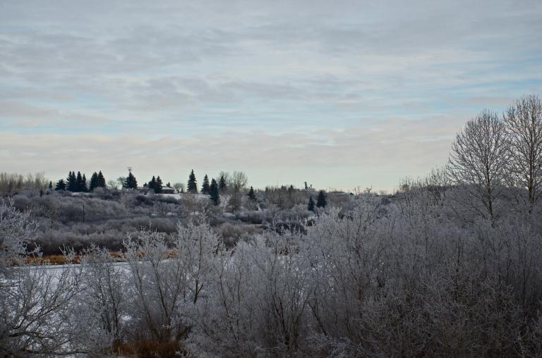 a wintery Saskatchewan scene