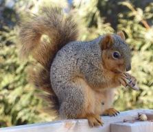 Sunday morning squirrel 3