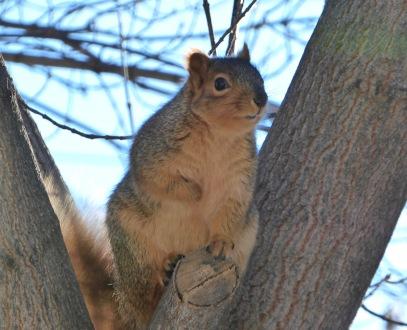 Sunday Morning Squirrel 4