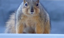 Sunday morning squirrel
