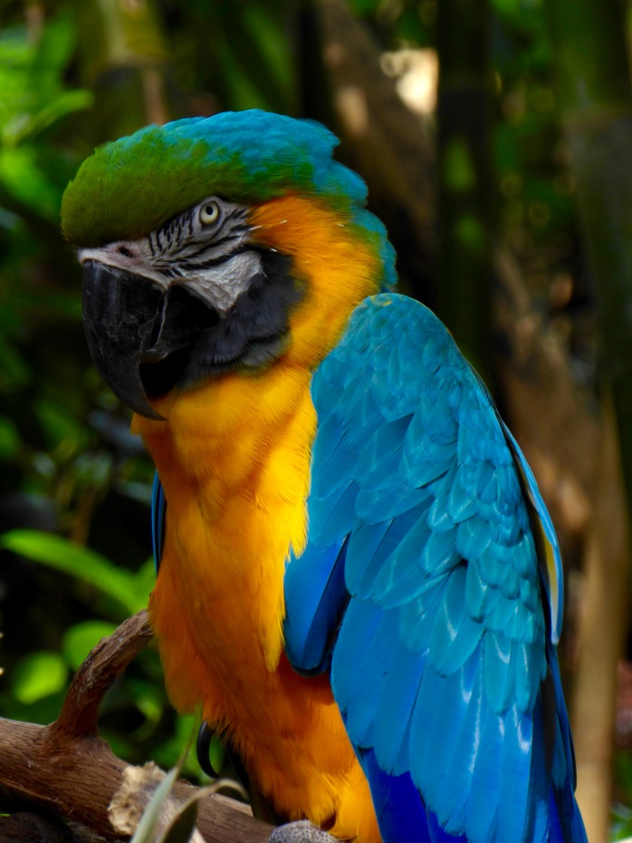 blue and yellow macaw 2