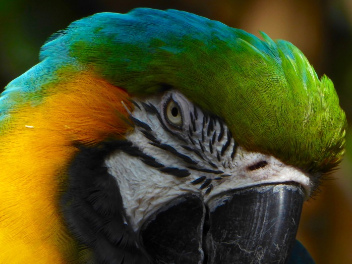 macaw close up 2