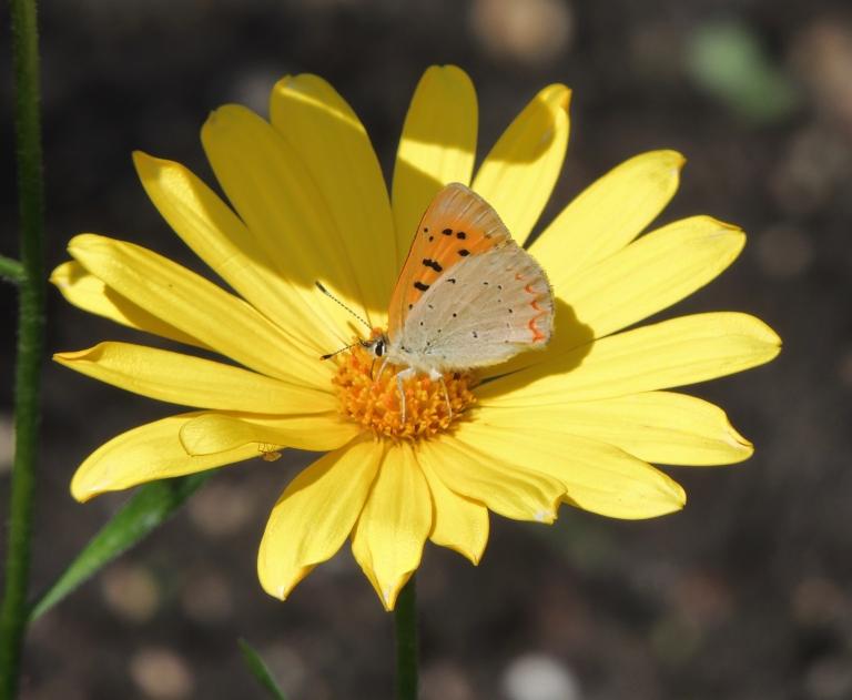 orange and yellow-2.jpg