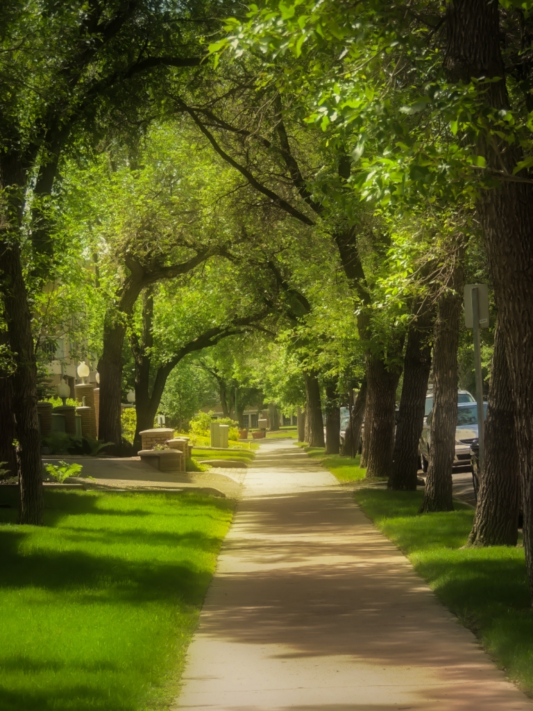 romantic tree lined street-2