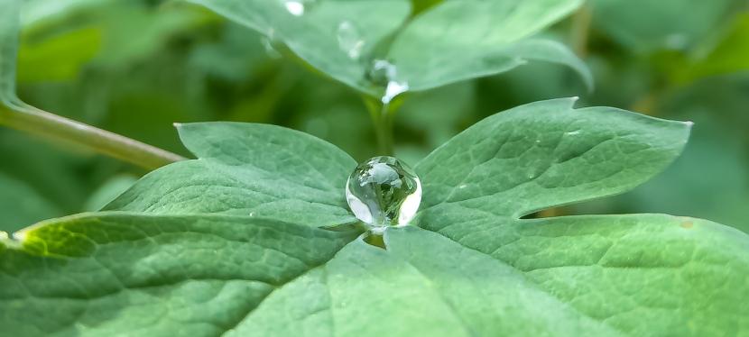 remnants of rain