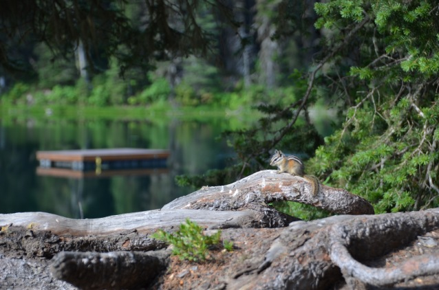 chipmunk with an awesome view