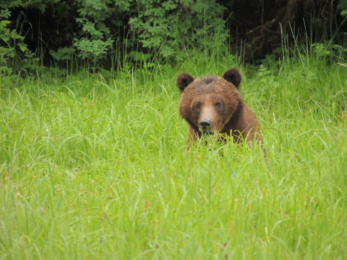 great-bear-rainforest-2013-2